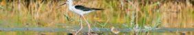 parc ornithologique marais poitevin